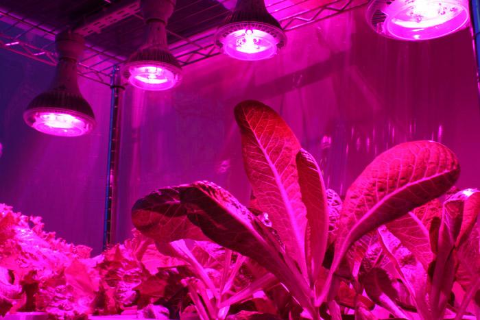 Какие растения растут под уф