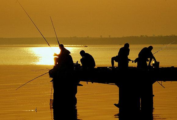 отруби для прикормки рыбы