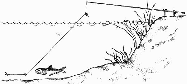 Ловля линя на полудонку