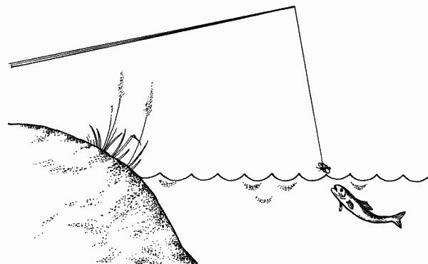 Ловля подуста маканием насадки