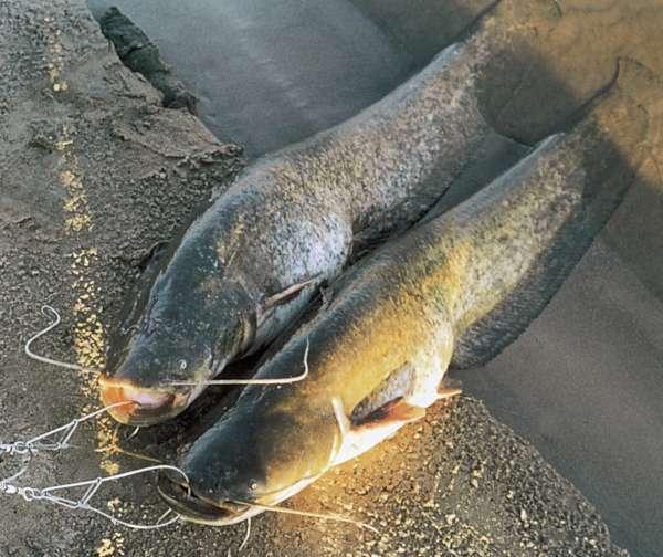 Пенопласт для рыбалки своими руками 78