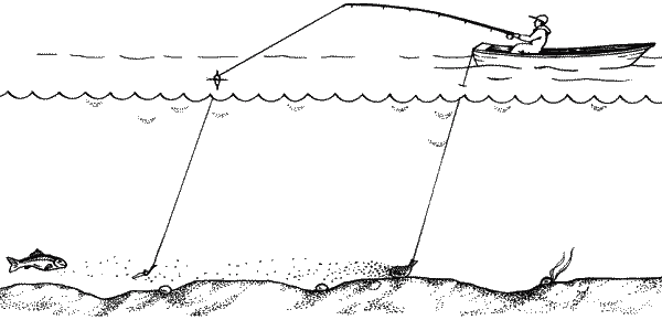 Ловля карпа на кормовой дорожке