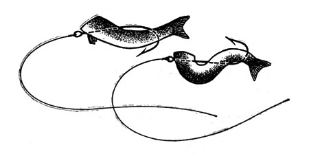 как насадить пиявку на крючок для ловли сома