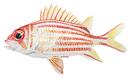 Изображение рыбы Рыба-белка
