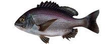 Изображение рыбы Морской карась дальневосточный