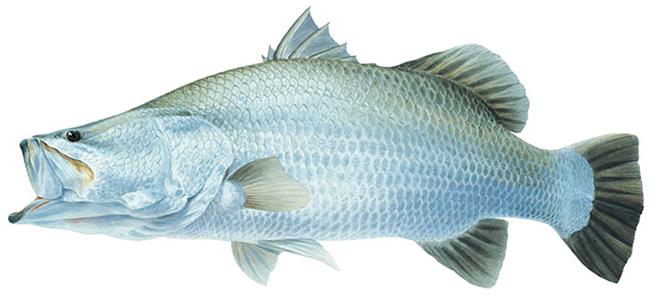 Изображение рыбы Барамунди