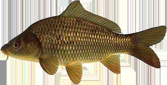 на что клюёт рыба язь